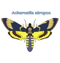Butterfly Acherontia atropos vector