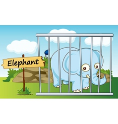 Cartoon zoo elephant vector