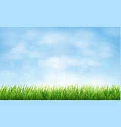 field or meadow with green grass vector image