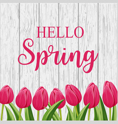 hello spring banner with pink blooming tulip vector image