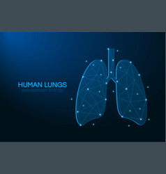 human lungs made points and lines polygonal vector image