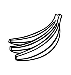 Isolated bunch of bananas on a white background vector