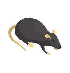 rat isometric icon vector image