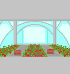 Strawberry plantation in greenhouse vector