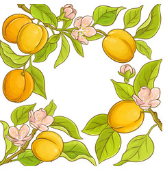 apricot frame vector image