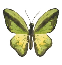 Green butterfly vector