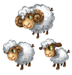 white sheep in different poses animal vector image