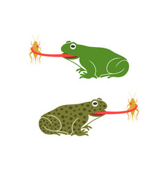 a frog to eat vector image