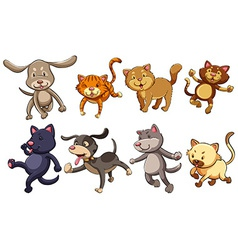 A group of playful cats and dogs vector image