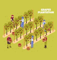 Grapes plantation isometric vector