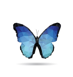 Butterfly isolated vector image