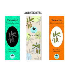 Ayurvedic herbs banners tamarind tamarindus vector