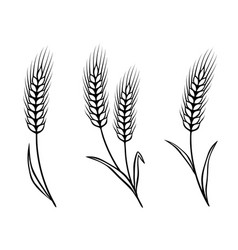 Isolated wheat ears vector