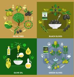 olives flat design concept vector image