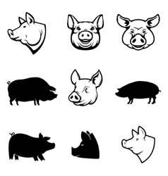 Set of pork labels pig silhouettes and heads vector