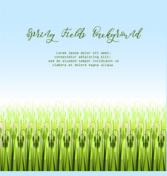with stylized green rice vector image