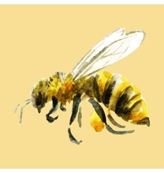 Watercolor hand drawn bee vector image vector image