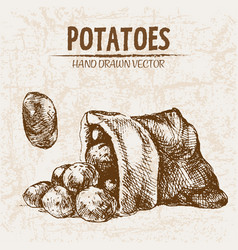 digital detailed line art potato vector image
