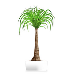 green palm in white pot isolated on white vector image