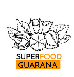 Icon superfood guarana vector