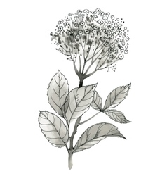 Beautiful hand-drawn monochrome wildflower vector image
