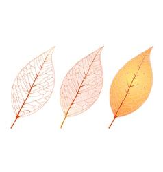 Autumn orange leaf set vector