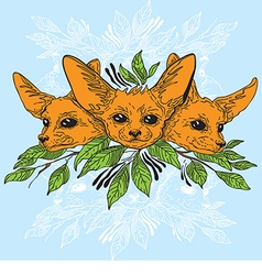 Fennec fox faces vector image