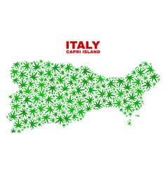 Marijuana leaves mosaic capri island map vector