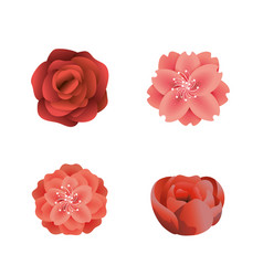 set exotic flowers plants with beauty petals vector image