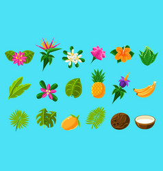tropical plants and fruits set vector image