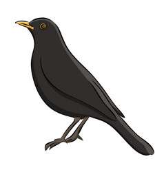 hand drawn blackbird sketch vector image