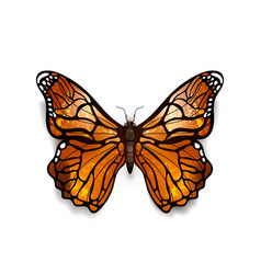Beautiful colorful detailed realistic butterfly vector