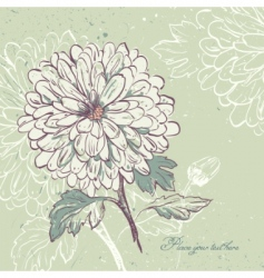 Blooming chrysanthemum vector