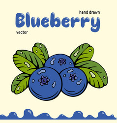 Blueberry berries images vector