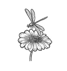 dragonfly daisy flower sketch vector image