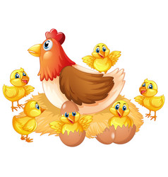 isolated chicken and chick vector image