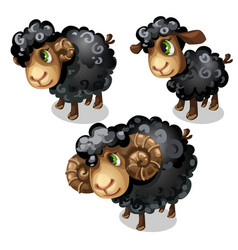 White sheep animal in cartoon style vector