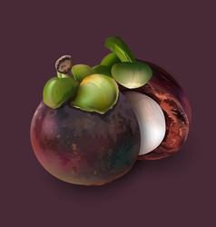 Mangosteen on dark purple vector