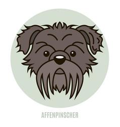 portrait of affenpinscher vector image