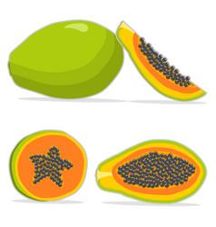 the papaya vector image