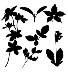 Set of botanical silhouettes vector image