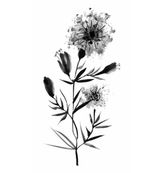 Beautiful hand-drawn monochrome herbs vector image