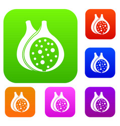 Fig fruit set color collection vector