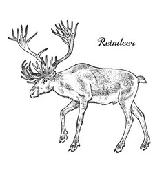 forest reindeer wild animal symbol north vector image