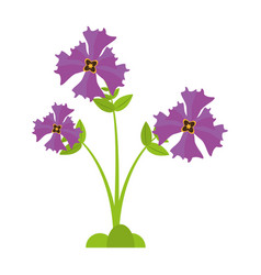 Iris flower garden botanical vector