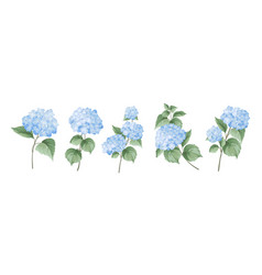 set different hydrangea branches on white vector image