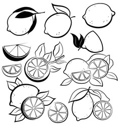set stylized lemons collection black and vector image