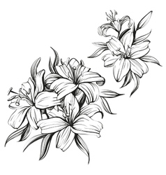 floral blooming lilies set hand drawn vector image