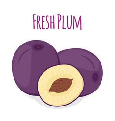 purple plum cartoon style vector image
