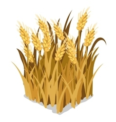 Planting and cultivation of wheat isolated vector image
